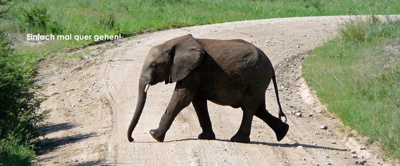 coaching-elephant-weg